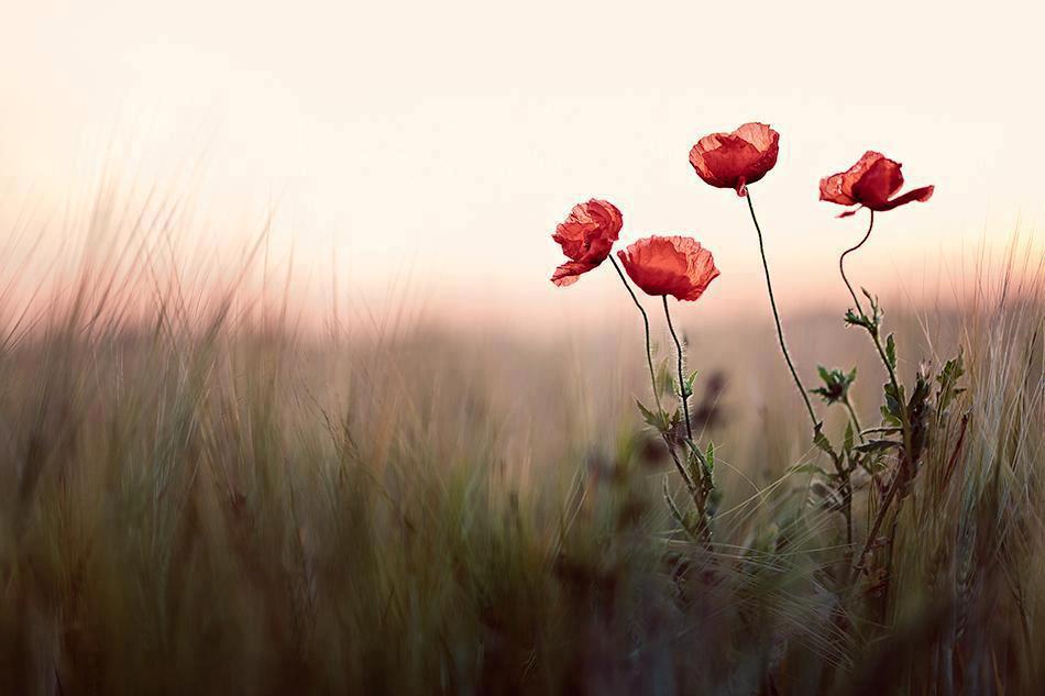 A Luz De Um Novo Dia Invade A Minha Alma E O Coração Se: O Jardim Secreto... Aqui Dentro De Nós: Que