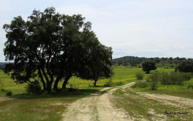 senda de las Lagunillas, primavera, campo, Chapinería, Madrid