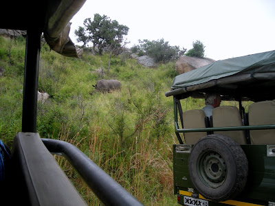South Africa, Kruger National Park, safari vehicle, rhino