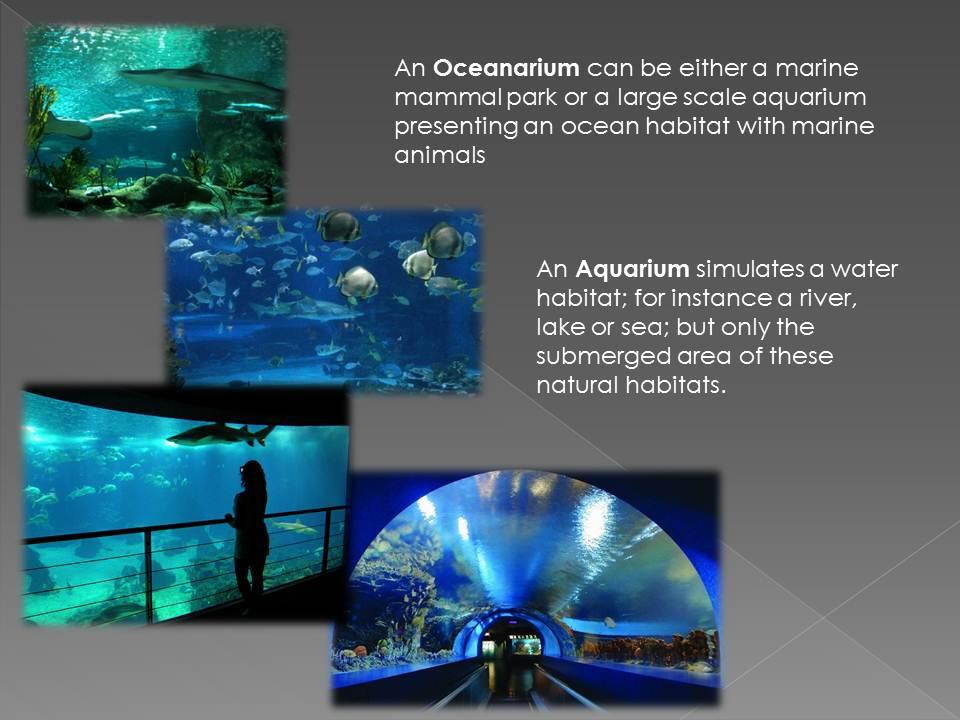 oceanarium thesis synopsis