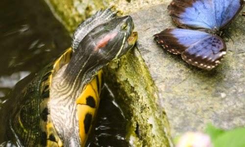 Arranca la convención sobre biodiversidad