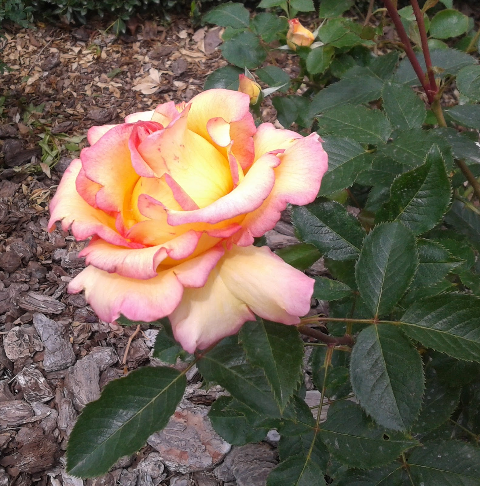 Lastima se caso rosa estela - 3 4
