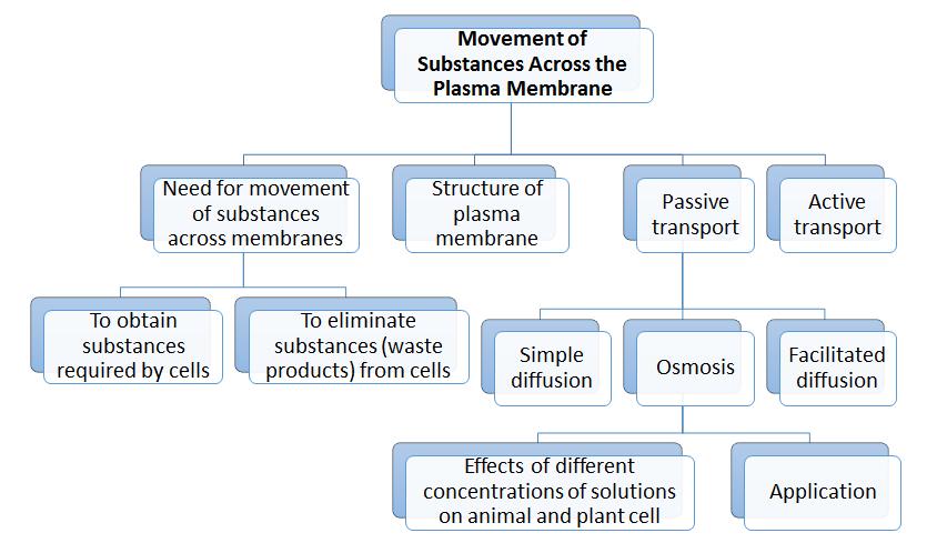 Seven Days Per Week Spm Biology 3 Movement Of Substances Across The
