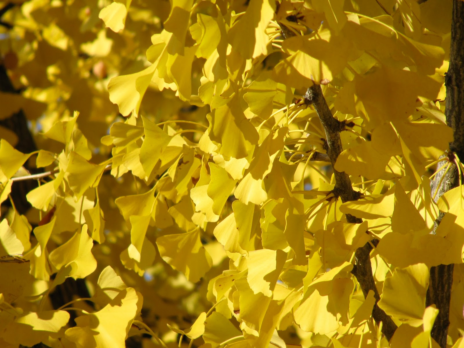 a life designing plants for autumn colour in the garden