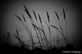 Cramer Imaging's professional quality nature black and white nature photograph of tall grass against sky in City of Rocks National Reserve, Idaho