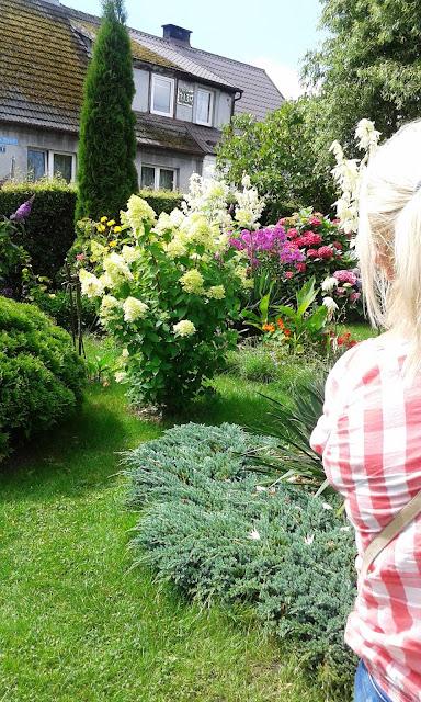 Domowy ogród w pączkarni w Wierzchucinie, paczki w wierzchucinie