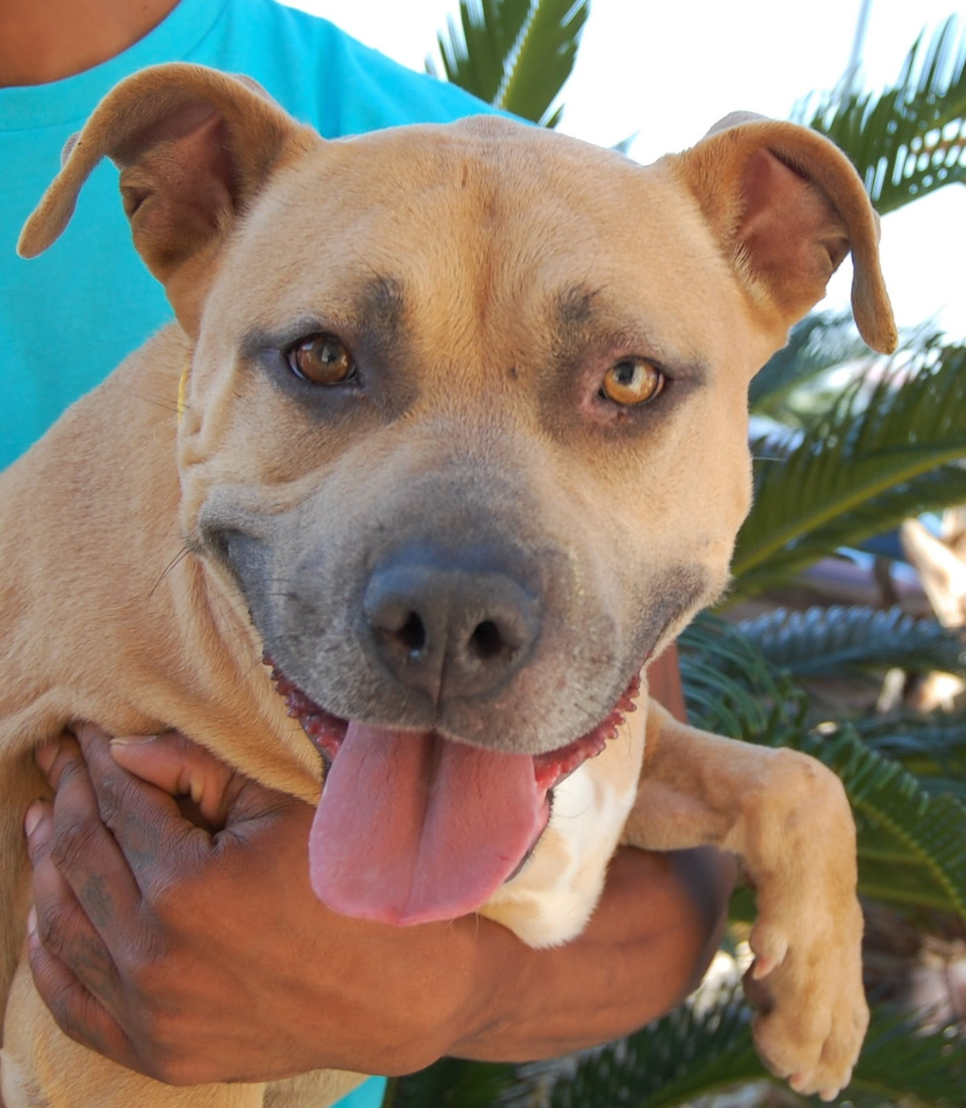 Nevada Spca Animal Rescue Hazel