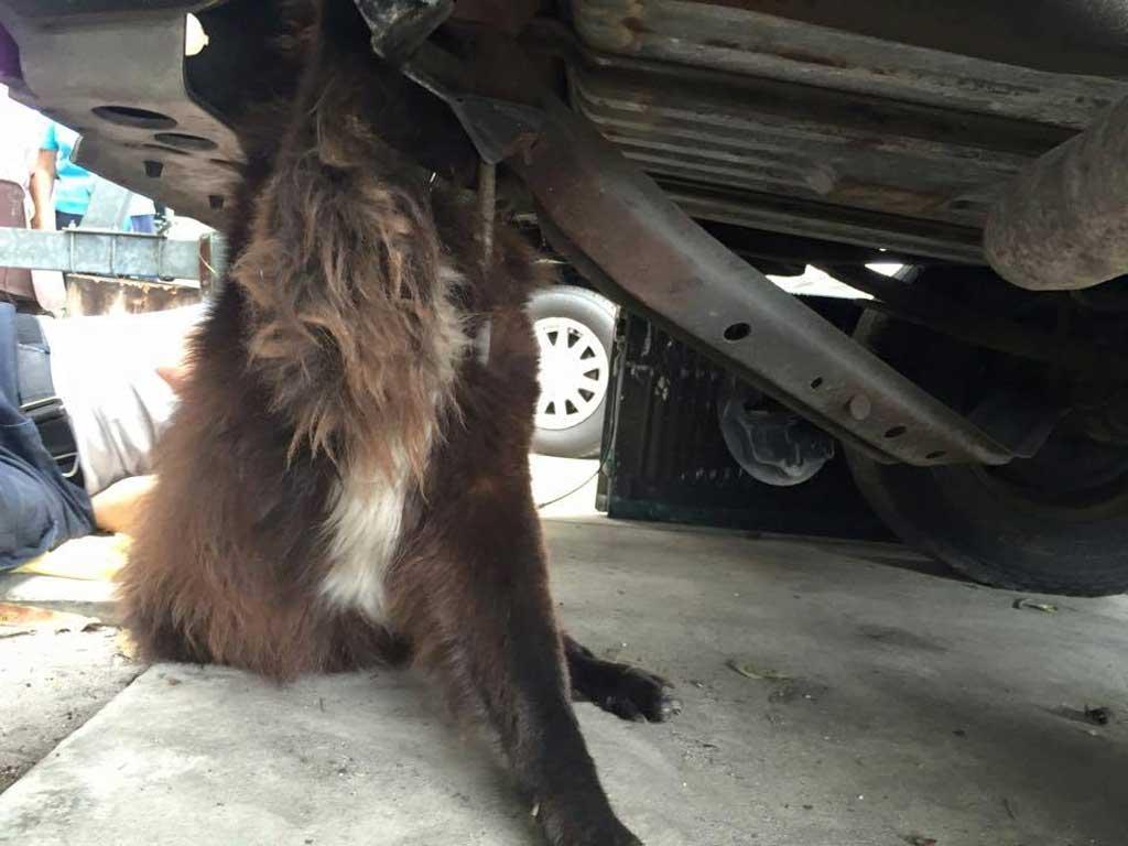 Arbroath Dog Rescue
