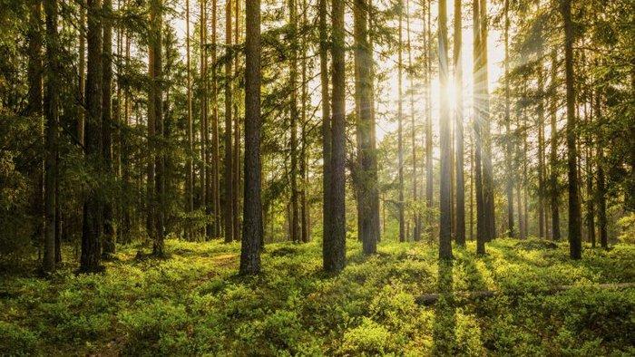 Podemos considerar uma floresta como sendo matéria - O lado bom da Química