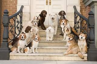 Perros de cine