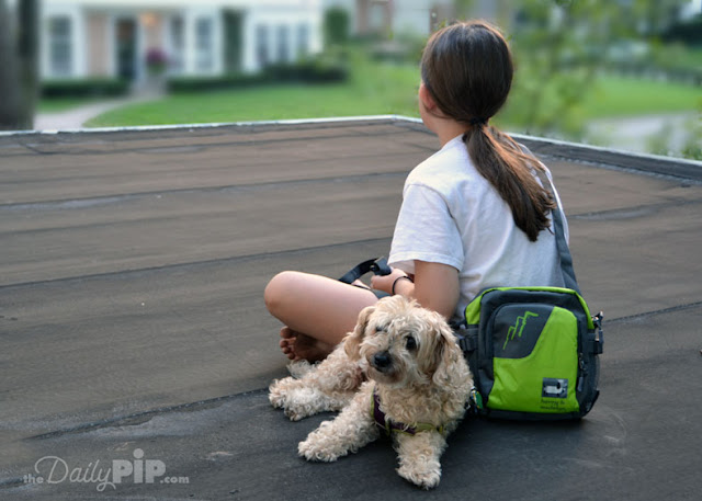 The Fido to Go Bag is the perfect dog accessory for hikes or leisure