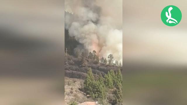 Medios aéreos y terrestres trabajan para controlar un incendio forestal que se ha originado esta tarde en Tijarafe