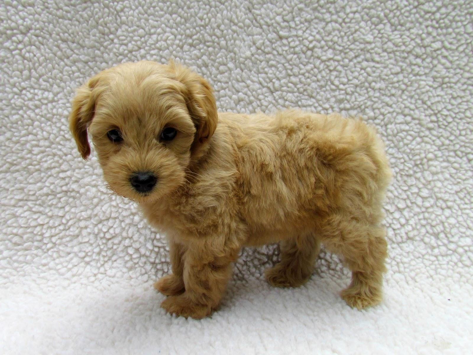 Is A  Month Old Dog Still A Puppy
