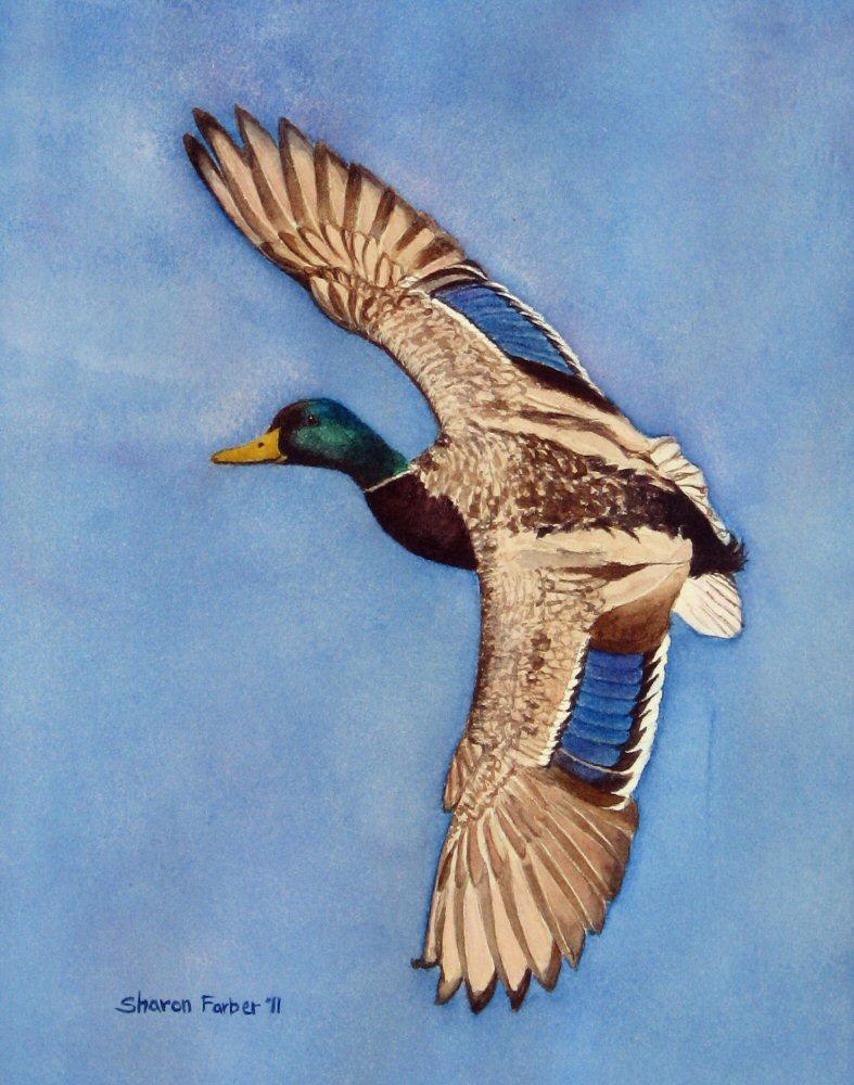 Mallard Duck Flying Drawing | www.imgkid.com - The Image ...