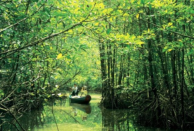 rừng ngập mặn cần giờ