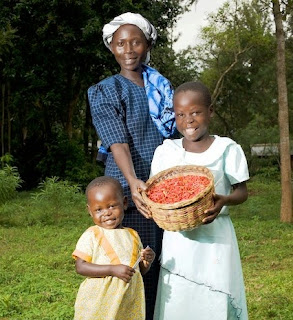 Micro Gardening for Food in Africa