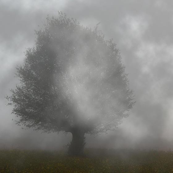 Tree in Fog Wallpaper Engine