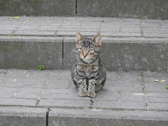 zwierzę spotkane na schodach w Lubniewicach