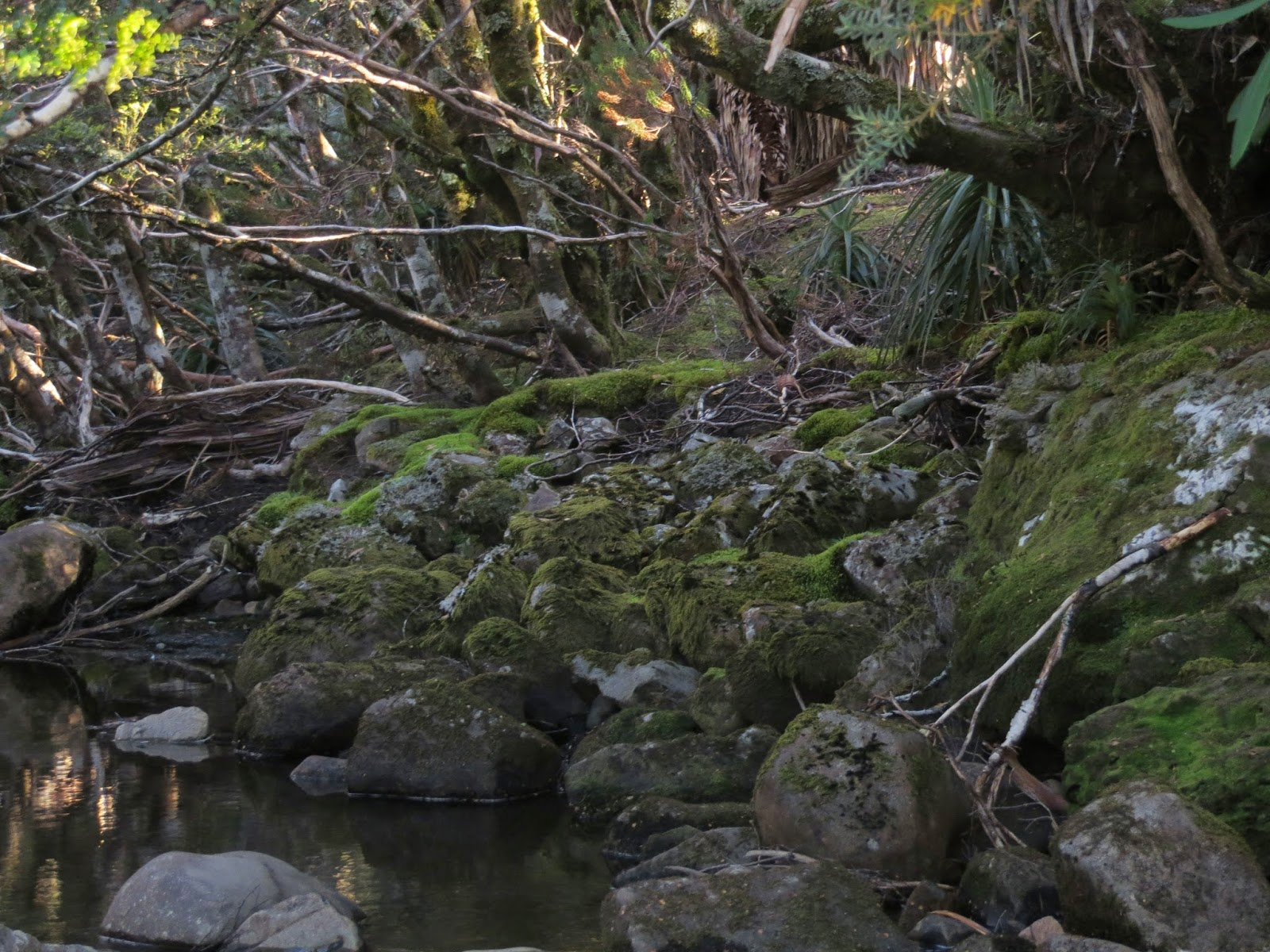 Längste Videos nach Tag: kia rey