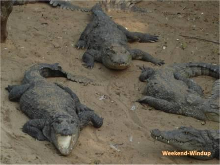 Chennai Crocodile Park