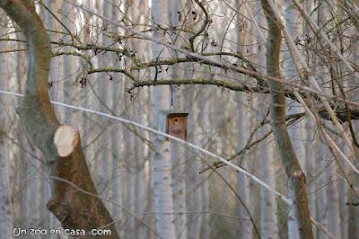 Caja nido en el Estany de Sils