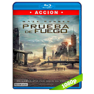 Maze Runner: Prueba de fuego (2015) Full HD 1080p Audio Dual Latino-Ingles