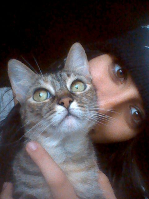 viajar-con-mascotas-hoteles-admiten-gatos