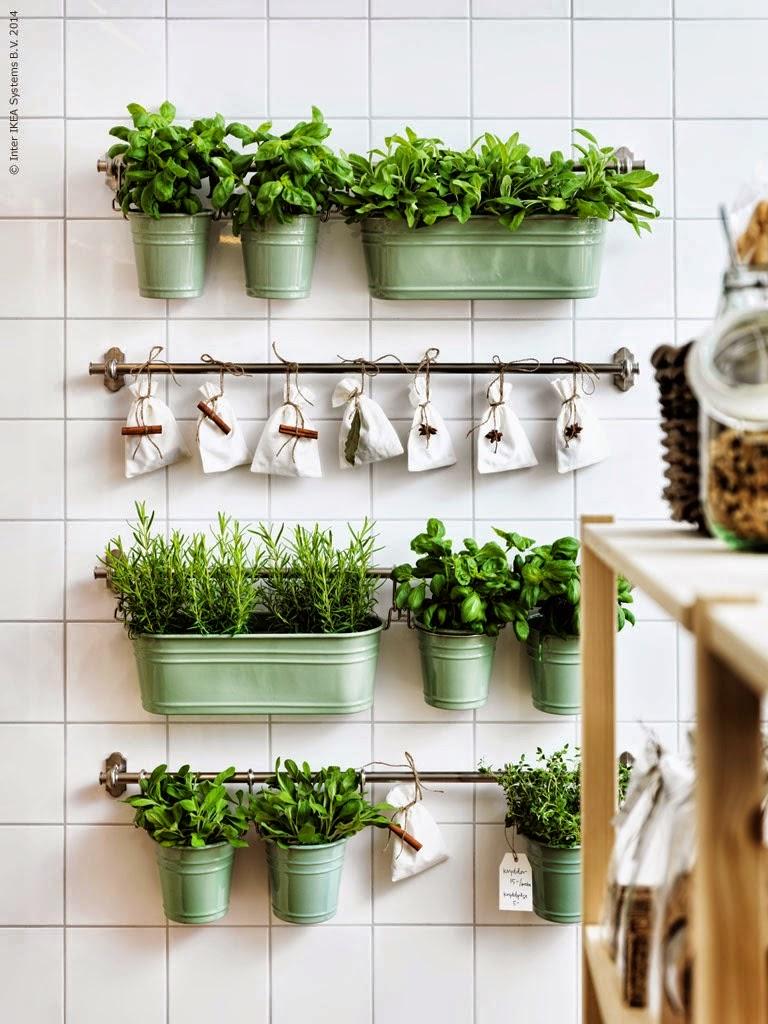 Plantas aromáticas para nuestra casa