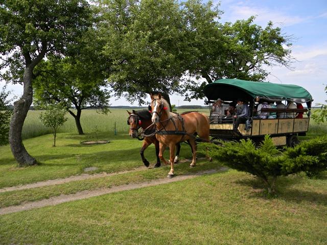 konie, wóz, zespół ludowy, konie