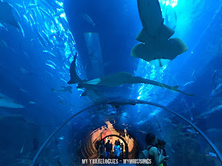 It was onetime inwards belatedly June this twelvemonth in addition to a typical summertime forenoon inwards Dubai Visit to the Dubai Aquarium in addition to Underwater Zoo: Mesmerized yesteryear the Finned Beauties