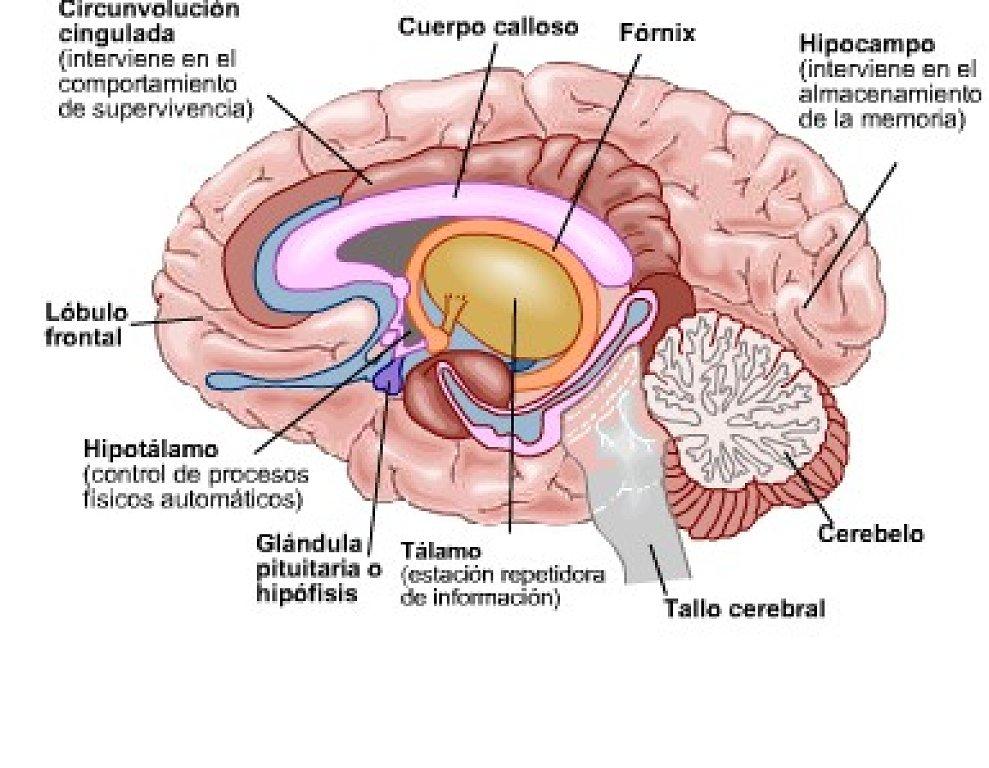 Procesos Activadores De La Conducta 2015 Fisiología De La