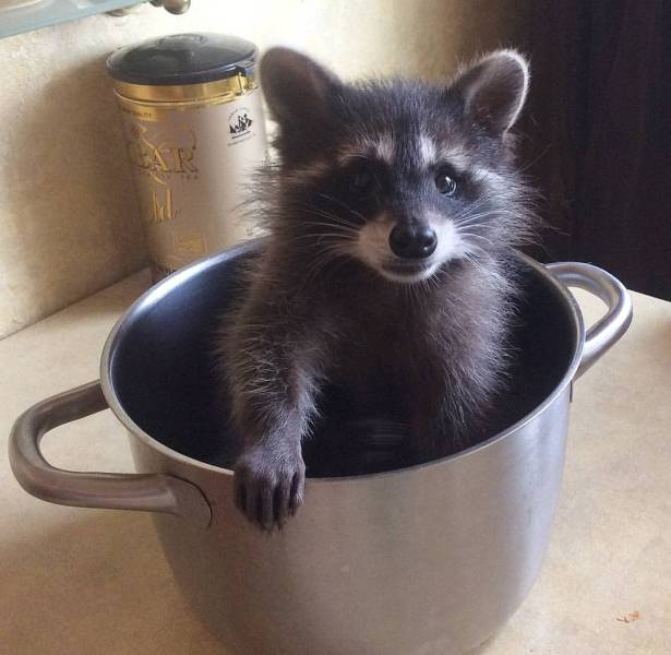 Funny animals of the week - 10 November 2017, cute animals, adorable animal image, best animal picture