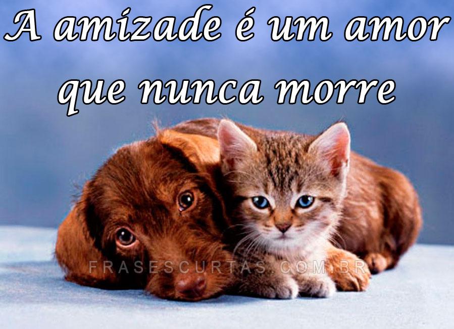 Mensagens E Frases Sobre Amigos Para Sempre A Verdadeira Amizade