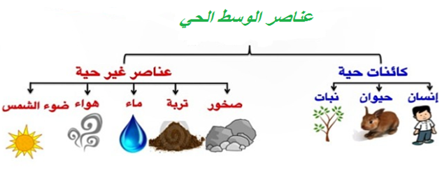 بحث حول مكونات الوسط البيئي