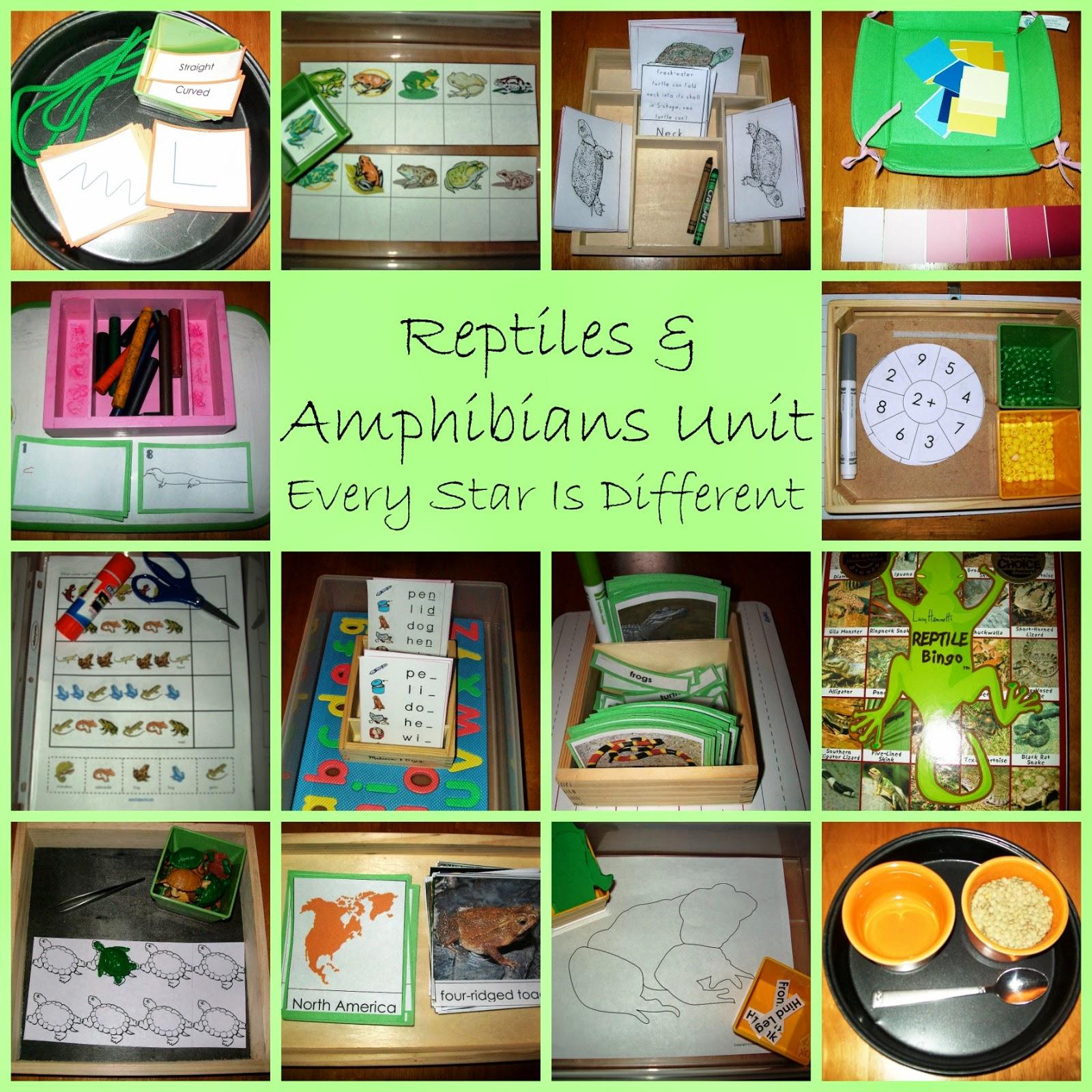Reptiles and Amphibians Unit