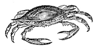 crab sealife image ocean illustration digital download