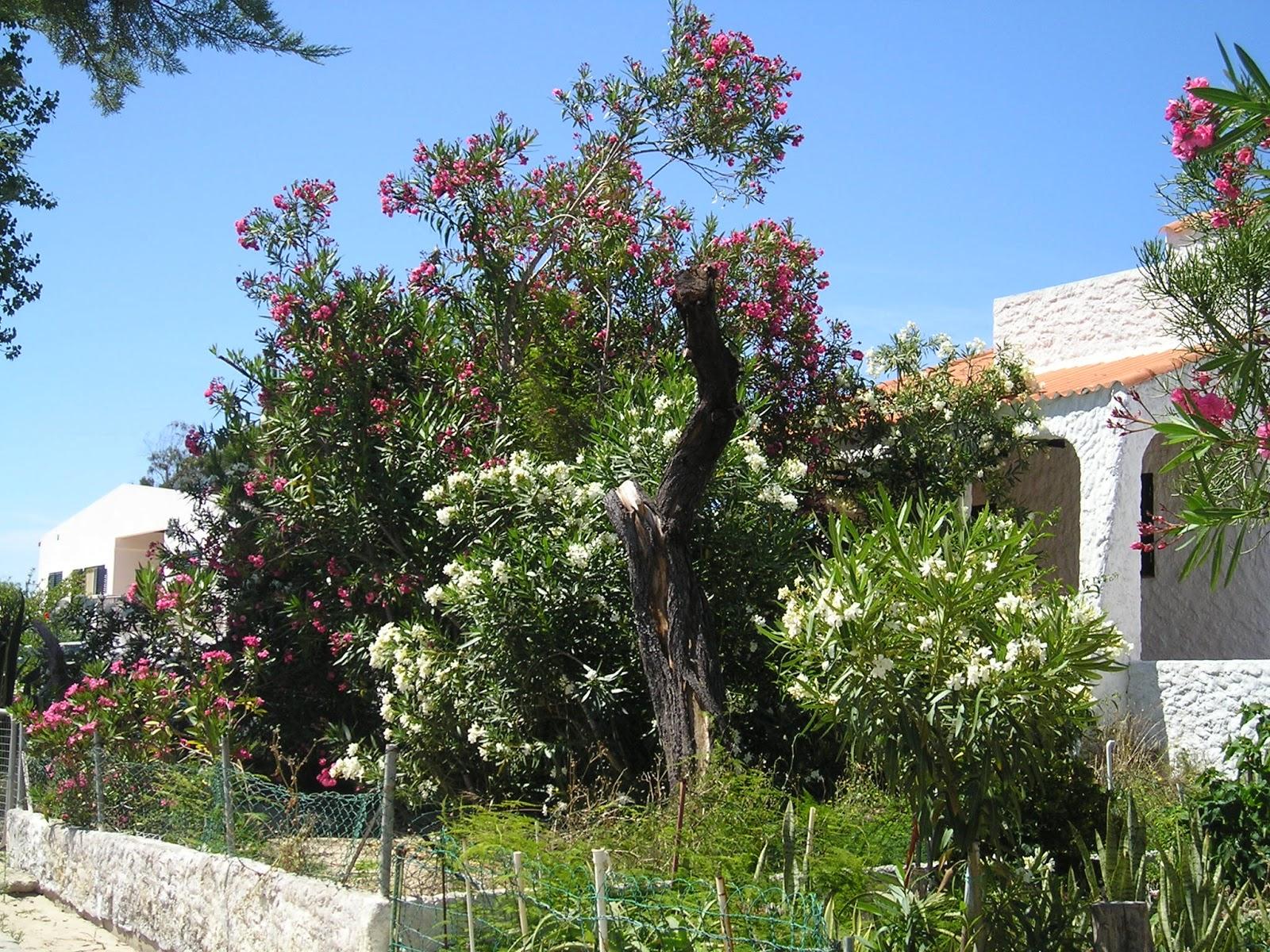 portugalenphotos armona et ses jardins. Black Bedroom Furniture Sets. Home Design Ideas