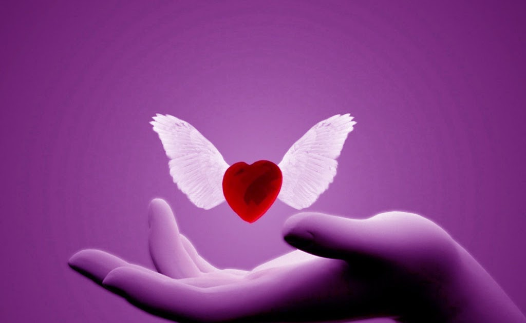 No Love Wallpaper: Free Download Love Wings Wallpapers