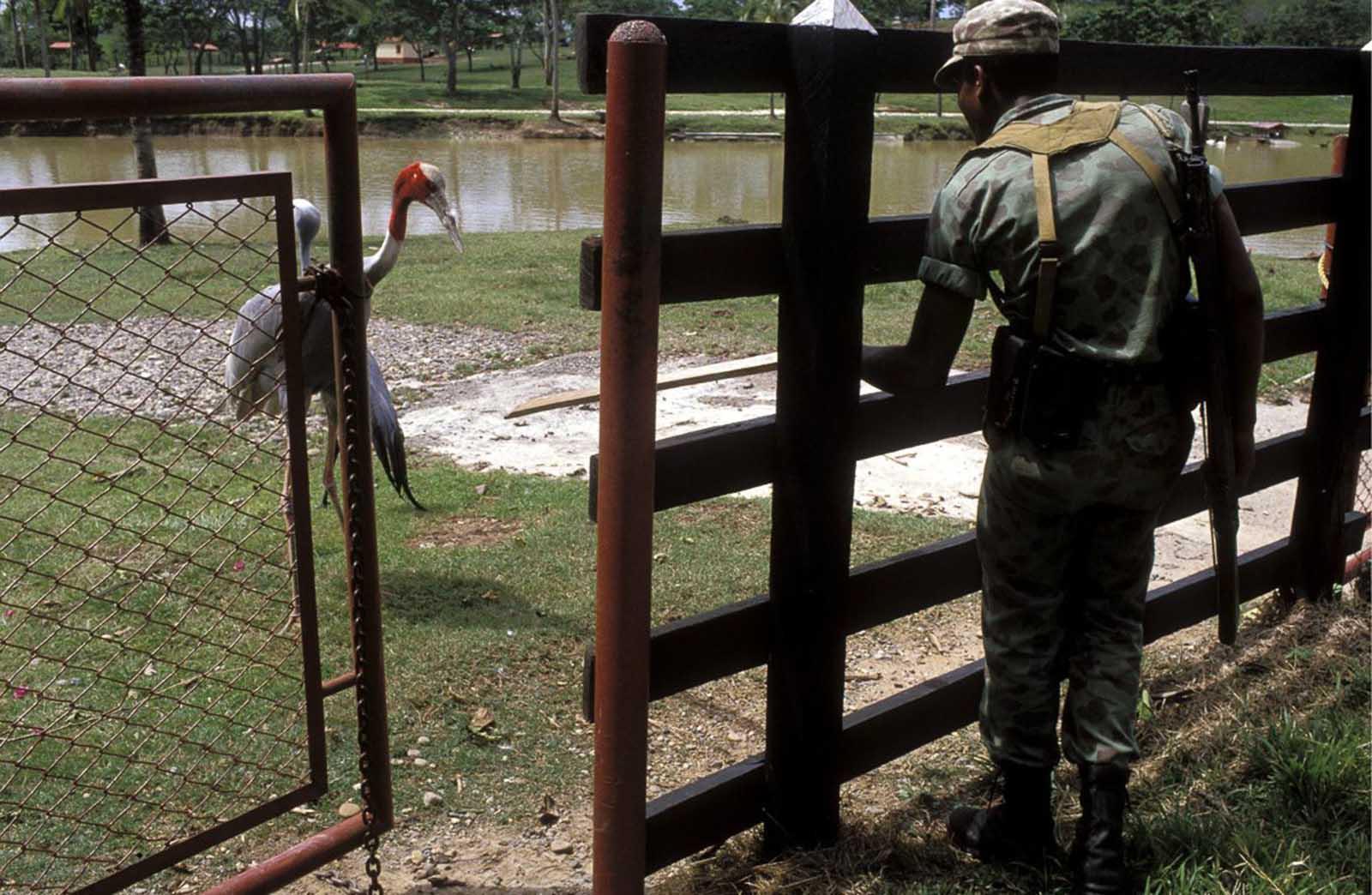 Un soldado inspecciona uno de los prados en el zoológico de la hacienda.