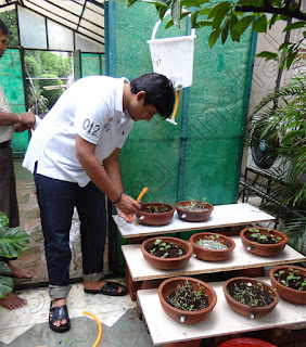 Shantanu growing vegetables without soil