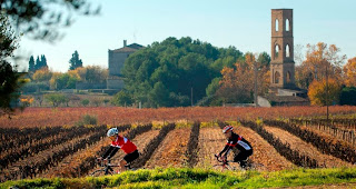 cycling among vineyards
