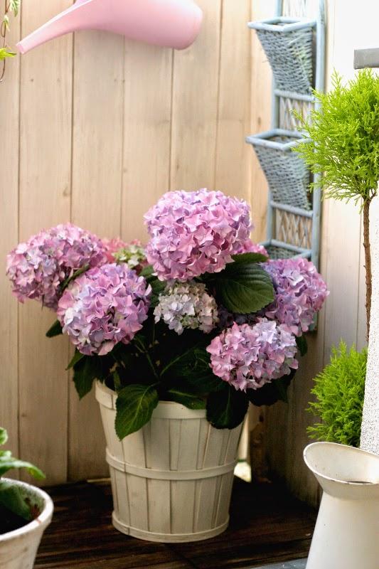 Top 10 Czyli Najpiękniejsze Kwiaty Doniczkowe Deccoriapl