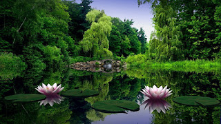 Best Flowar And Nature Wallpapers