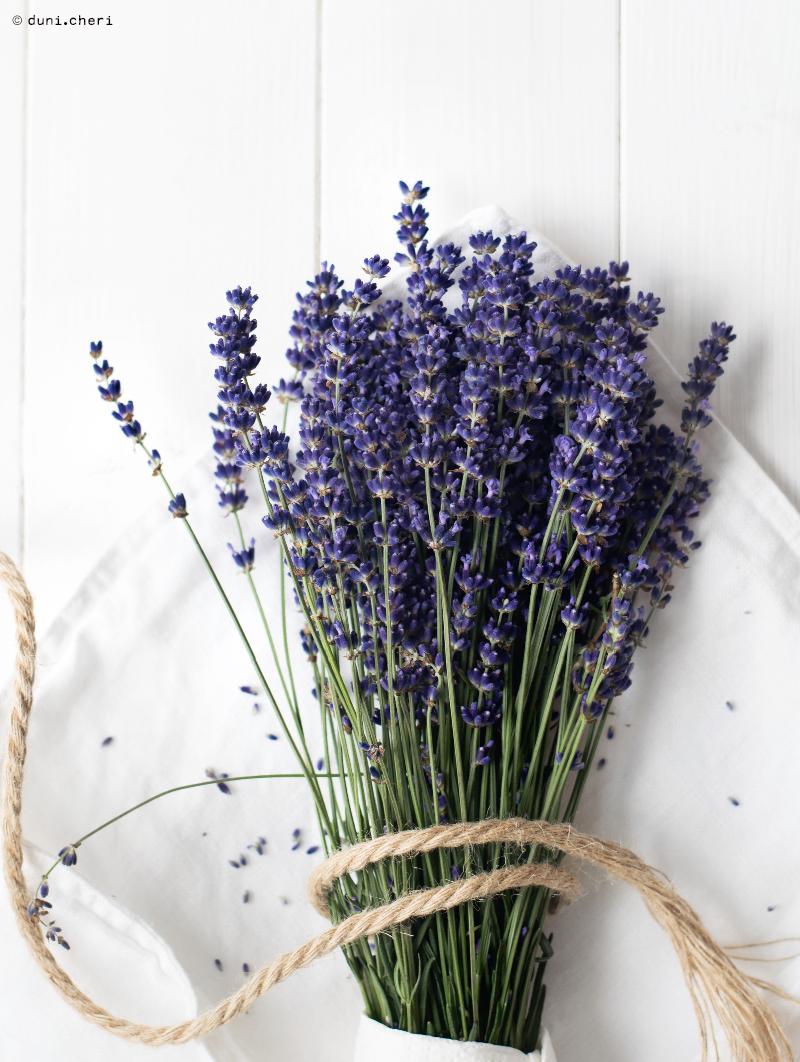 frischer lavender fotografie stillleben