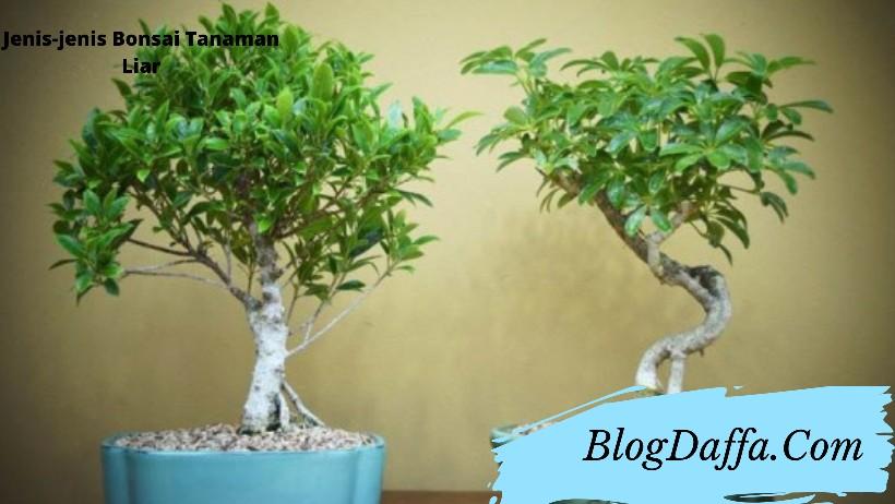 Jenis bonsai tanaman liar di Indonesia