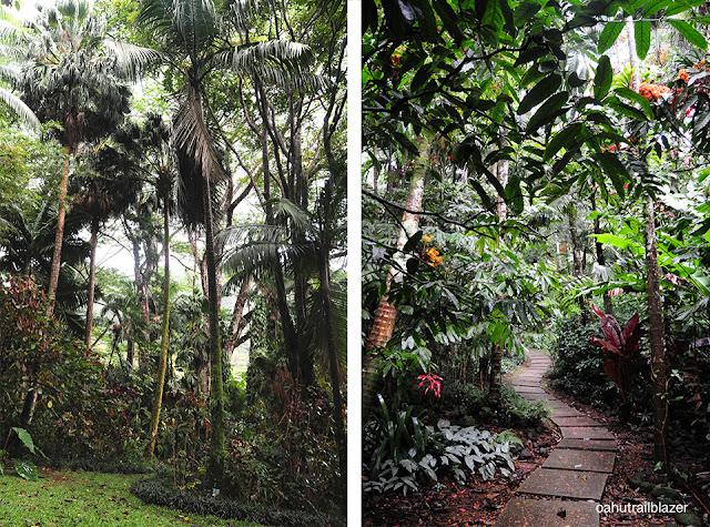hawaii arboretum Oahu