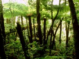 Tropical Rainforest and Mangrove: How do Tropical ...  Tropical Rainfo...