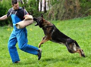 Otto cani più aggressivi del mondo
