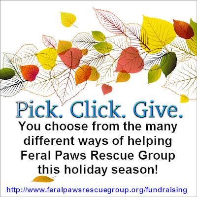 http://www.feralpawsrescuegroup.org/fundraising