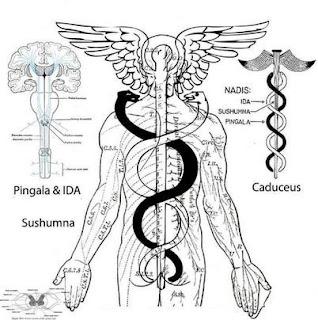 Caduceo-India-Chacras-yoga-simbolismo-significado-pingala-ida